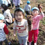 大きなニンジンを収穫し笑顔の園児