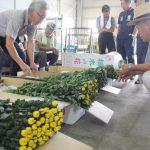 菊の出荷規格を確認する研究会員ら