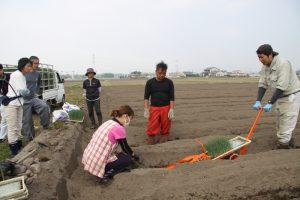 定植の体験をする新規栽培者