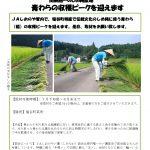 プレスリリースvol.14 青わら 収穫最盛.docx_pages-to-jpg-0001